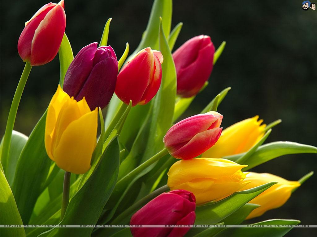 cách loài hoa đẹp 2